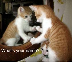 what is your name miniatiura