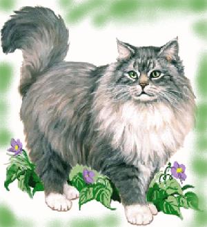 животные на английском - кошка, кот и киска
