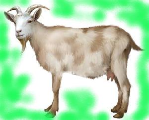 животные на английском - коза