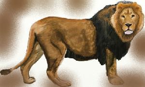 животные на английском - лев