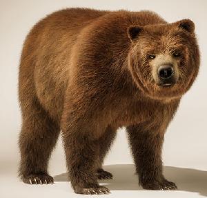 животные на английском - медведь, мишка