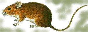 животные на английском - мышка, мышь, mouse
