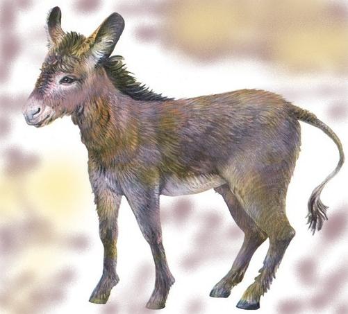 животные на английском - ослик, осел