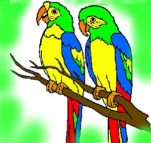 животные на английском - попугай