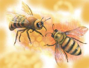 животные на английском - пчела