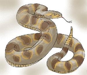 животные на английском - змея