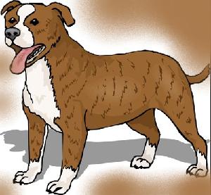 животные на английском - собака