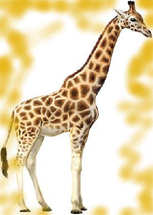 животные на английском - жираф