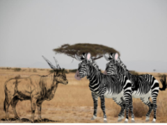 Животные Африки - видео с субтитрами, текст и перевод