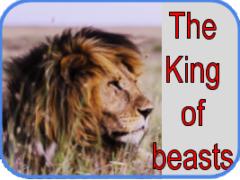 львы. рассказ на английском с переводом