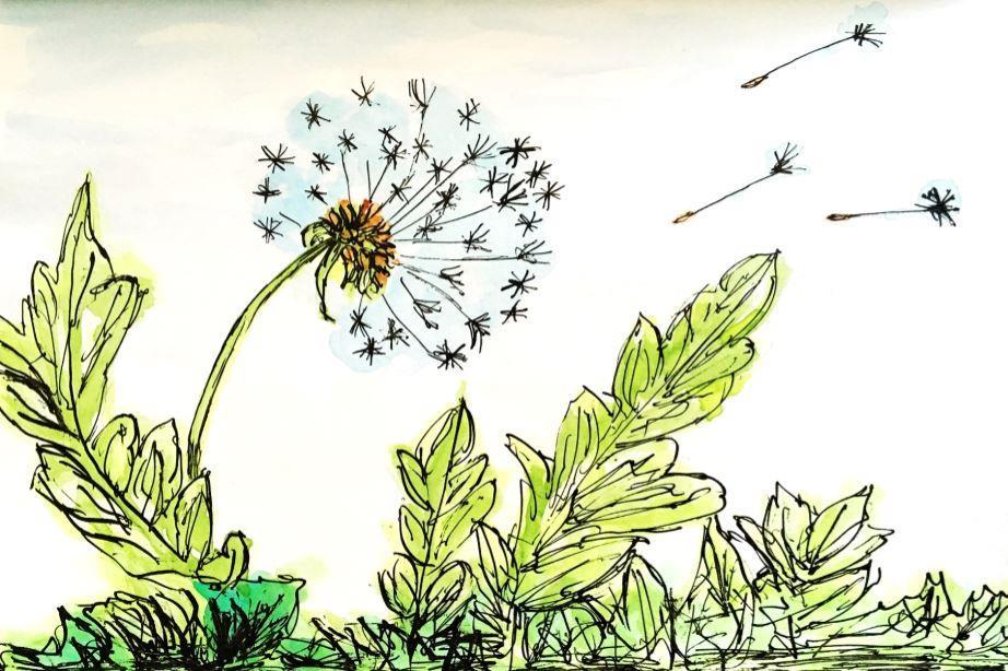 Растения (рассказ на английском) - dandelion