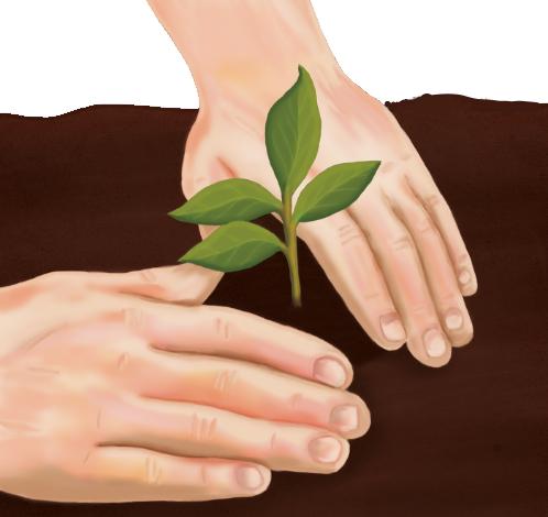 Растения (рассказ на английском) - посадка растения