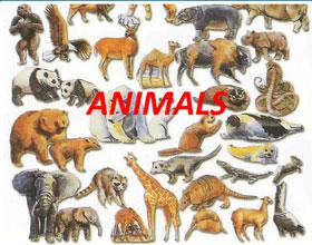 Мое любимое животное - миниатюра с сайта Английский самостоятельно