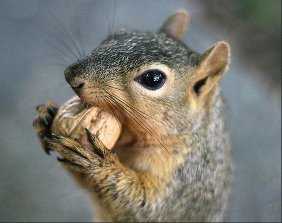 have got nut