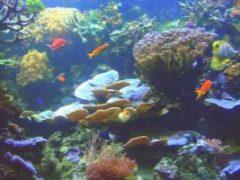 коралловые рифы миниатюра