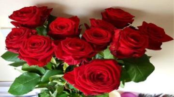 Red Roses - миниатюра к статье
