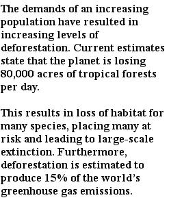 экологические проблемы - вырубка лесов